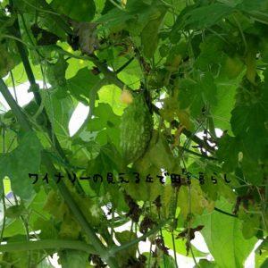 inaka-wineryhills_201609_1703