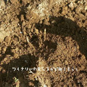 inaka-winary-201703spring01