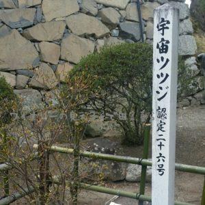 inaka-winary-matumoto-castle12