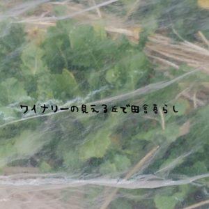 inaka-wineryhills_20170318hatake010