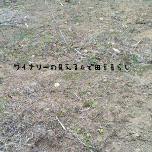 inaka-wineryhills_20170318hatake013