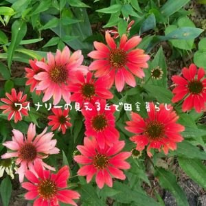 inaka-wineryhills_20170715-flower02