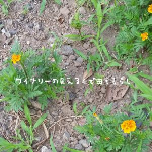 inaka-wineryhills_20170715-flower04