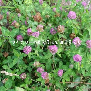 inaka-wineryhills_20170715-flower08