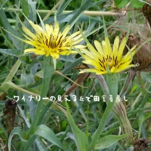 inaka-wineryhills_20170715-flower15