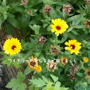 inaka-wineryhills_20170715-flower19
