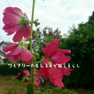 inaka-wineryhills_20170715-flower25