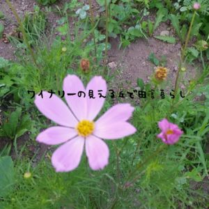inaka-wineryhills_20170715-flower27