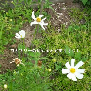 inaka-wineryhills_20170715-flower29