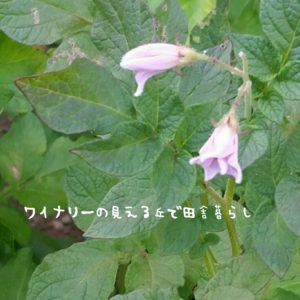 inaka-wineryhills_20170715-flower35
