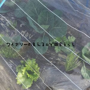 inaka-wineryhills_2017_companion_plants02