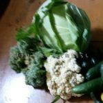 キャベツの植え付け・収穫について