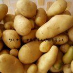 7月17日海の日連休の目的は、メークインだらけの芋掘り祭り!ふかし芋食べ比べは小野万塩辛のせがうまい!