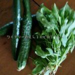 今日もほうれん草ときゅうりが収穫できました。ほうれん草のレシピについて考えてみた7月4日。