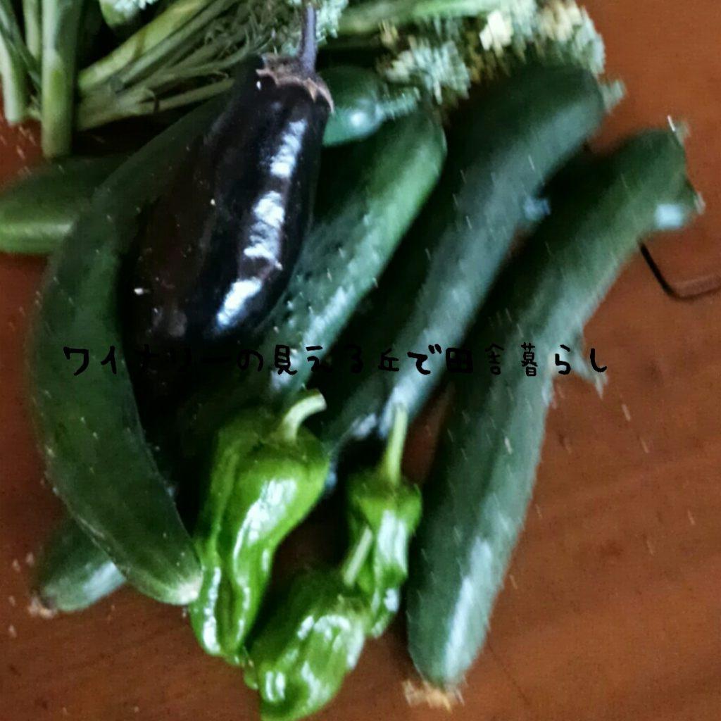 田舎暮らし地の長野の観光情報を少し紹介。7月7日はきゅうりとししとう、なす、ブロッコリーが収穫できたよ。