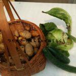 8月31日は先月収穫モレしたジャガイモと、市場に出ないキャベツ。