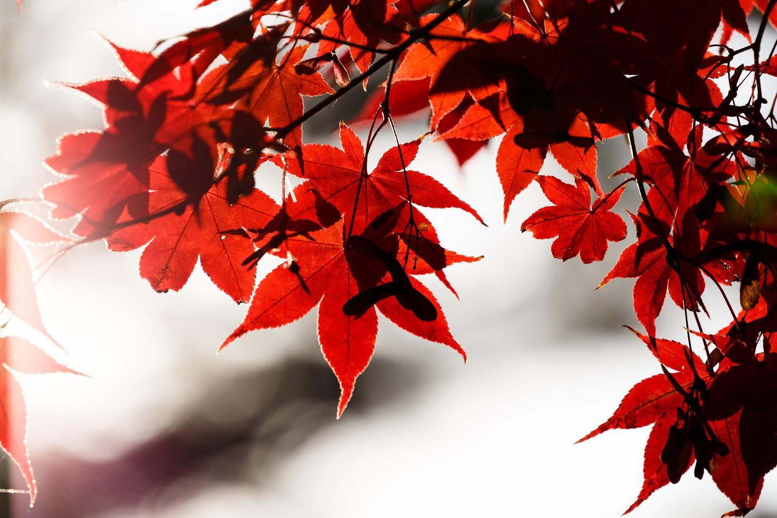 11月5日紅葉始まりましたよ!