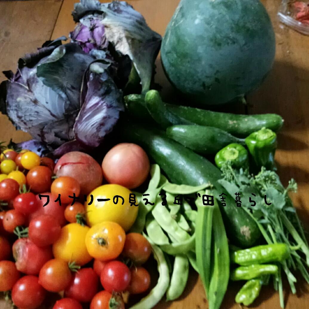 スイカの植え付け・収穫について