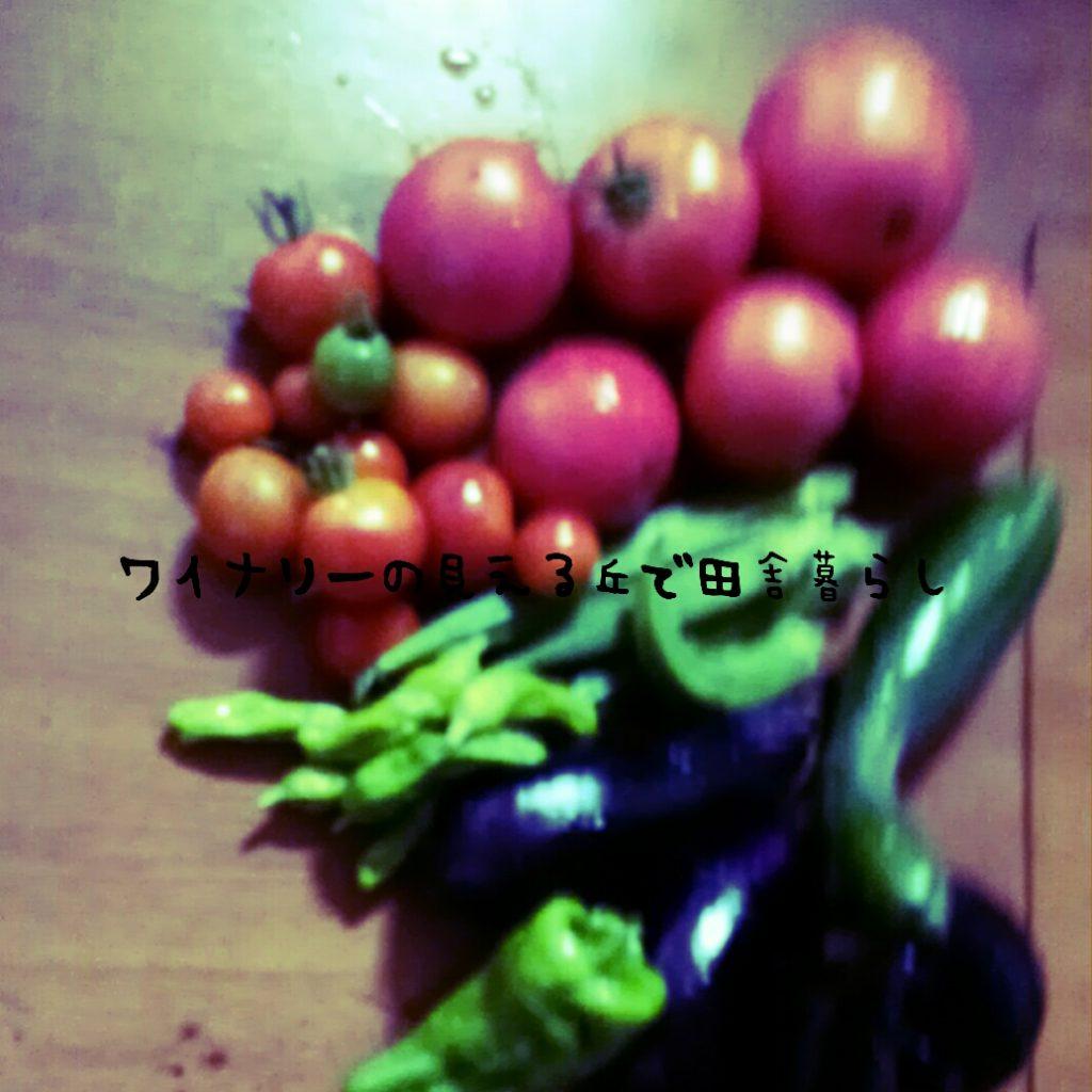8月26日ジャガイモを掘ったと言っていますが・・・・