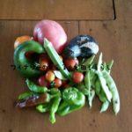 8月28日の収穫は色々あります。