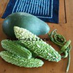 ゴーヤの植え付け・収穫について