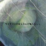 11月5日の朝が来ました。霜が降りた朝と野菜は・・・