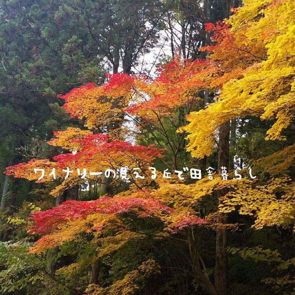 塩田平(別所温泉)で美しい紅葉に出会えた!さすがは市内観光案内!