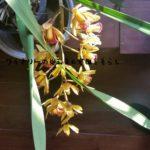 HitoHanaで母の日用ギフトを探す。豪華な胡蝶蘭だけでない、人気の観葉植物、多肉植物、盆栽もあるよ。