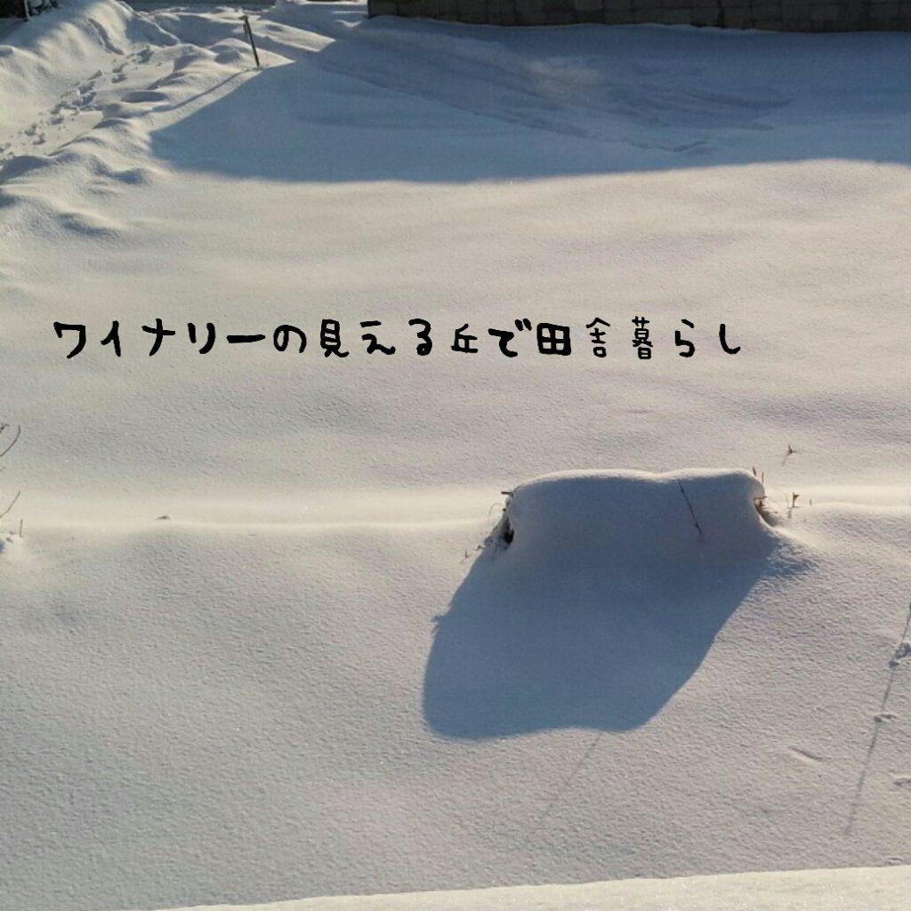 寒波の影響で雪が積もりました。