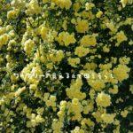 当日宅配も可能な地元密着の花キューピッドで母の日ギフトも間に合わせる。