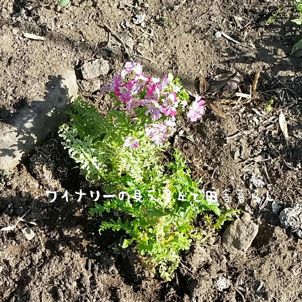 inaka-wineryhills_20170507-cultivate19