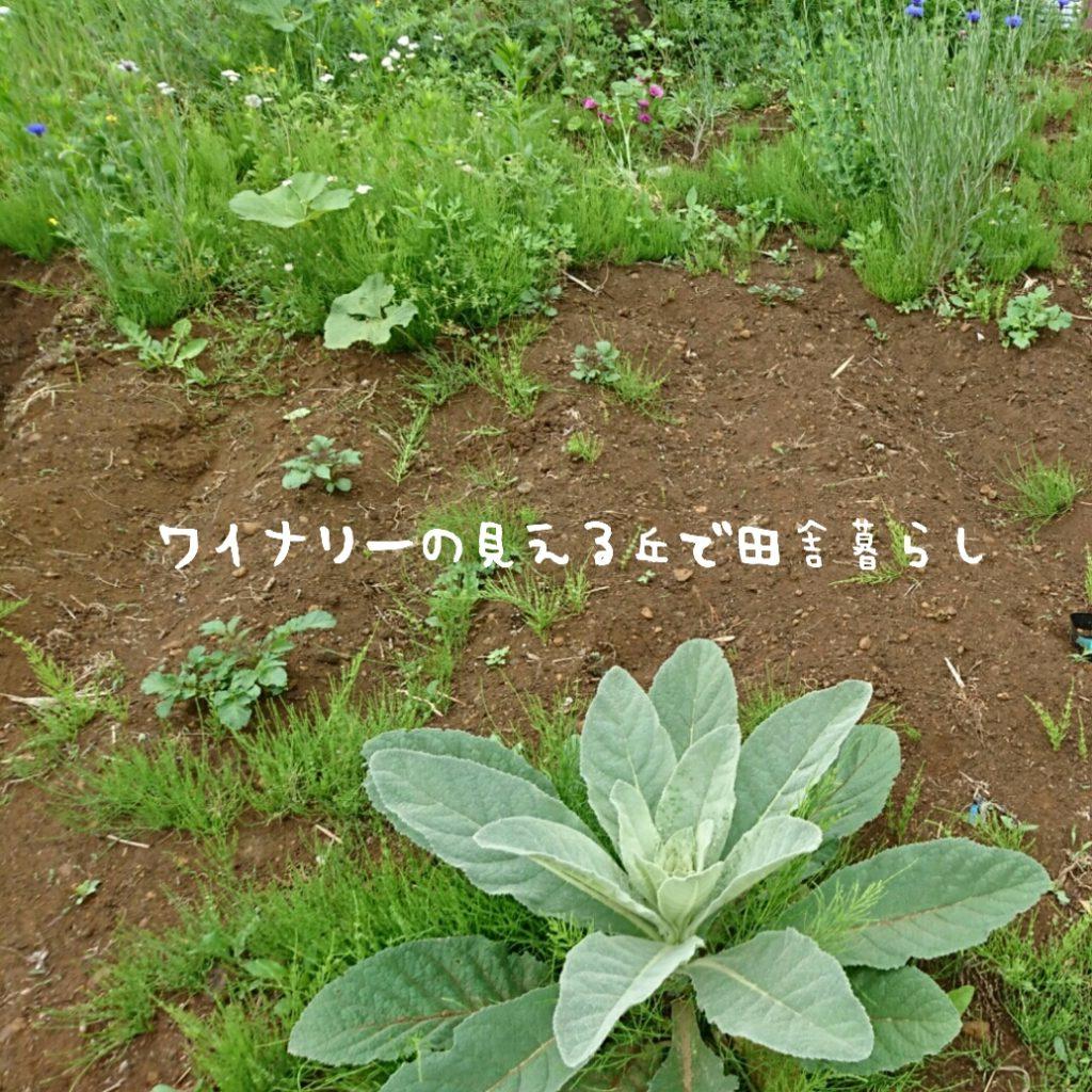 6月27日は畑の土づくり。