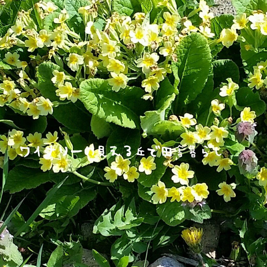 東京23区内ならば、当日配送も可能な胡蝶蘭はプレミアガーデン。急な法人用祝花や、記念日ギフトにも使えます。