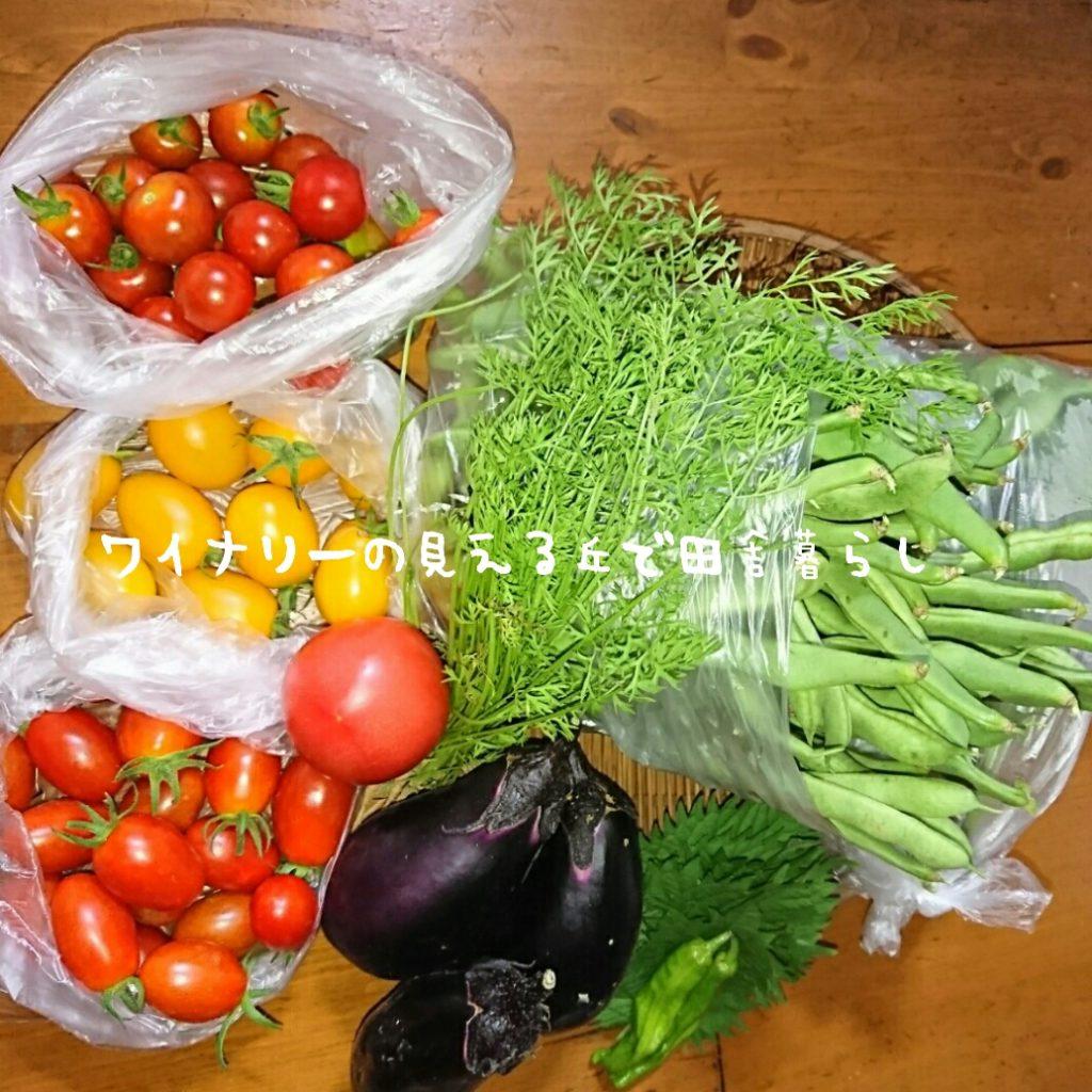 7月31日は収穫が多い日