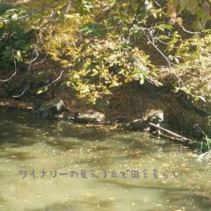 inaka-wineryhills_20171103_05_ueda_castle_kouyou