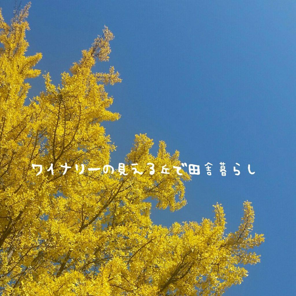 2017年上田城の紅葉まつりはドンピシャ!イチョウと青い空のコラボがとても素敵でした。