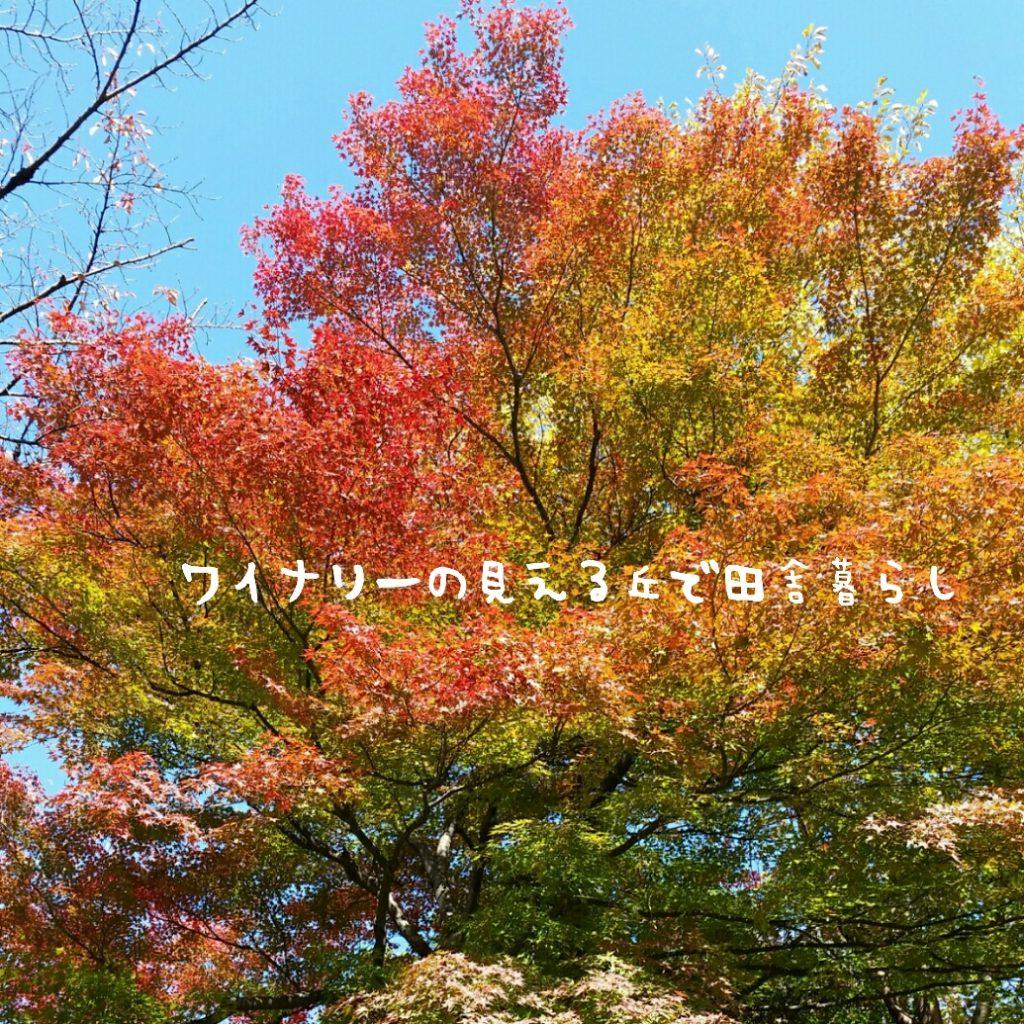 田舎暮らしin長野県の生活風景2017年11月