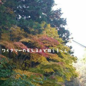 inaka-wineryhills_20171103_18_bessyo_onsen_kouyou
