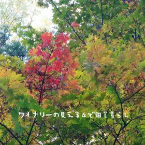 inaka-wineryhills_20171103_19_bessyo_onsen_kouyou