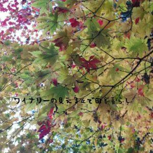 inaka-wineryhills_20171103_20_bessyo_onsen_kouyou
