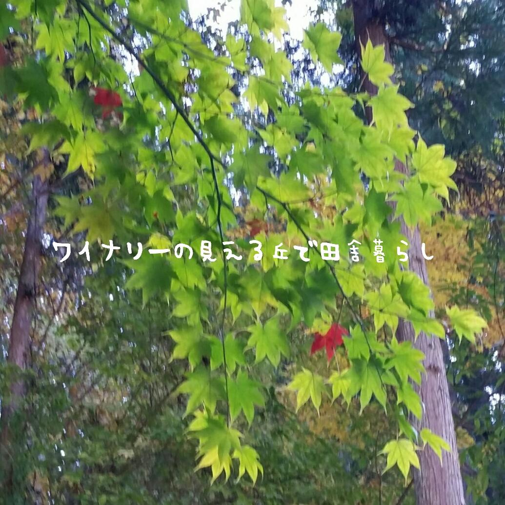 初詣で人気の北向観音の紅葉を見に行きました。