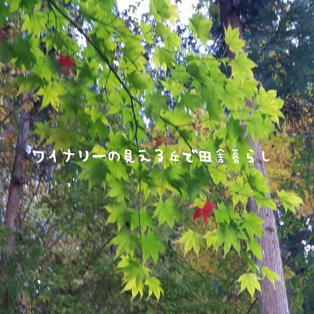 inaka-wineryhills_20171103_21_bessyo_onsen_kouyou