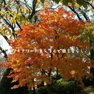 inaka-wineryhills_20171103_21_ueda_castle_kouyou