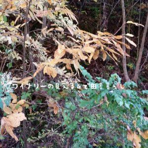inaka-wineryhills_20171103_22_bessyo_onsen_kouyou
