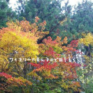 inaka-wineryhills_20171103_23_bessyo_onsen_kouyou