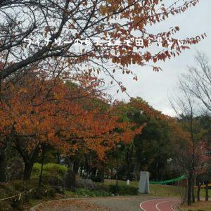 inaka-wineryhills_20171104_02_toumi_central_park_kouyou