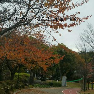inaka-wineryhills_20171104_03_toumi_central_park_kouyou