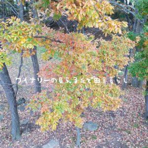 inaka-wineryhills_20171104_05_toumi_central_park_kouyou