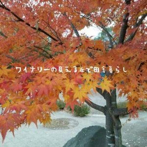 inaka-wineryhills_20171104_09_toumi_central_park_kouyou