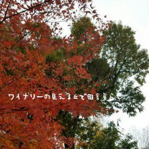 inaka-wineryhills_20171104_10_toumi_central_park_kouyou